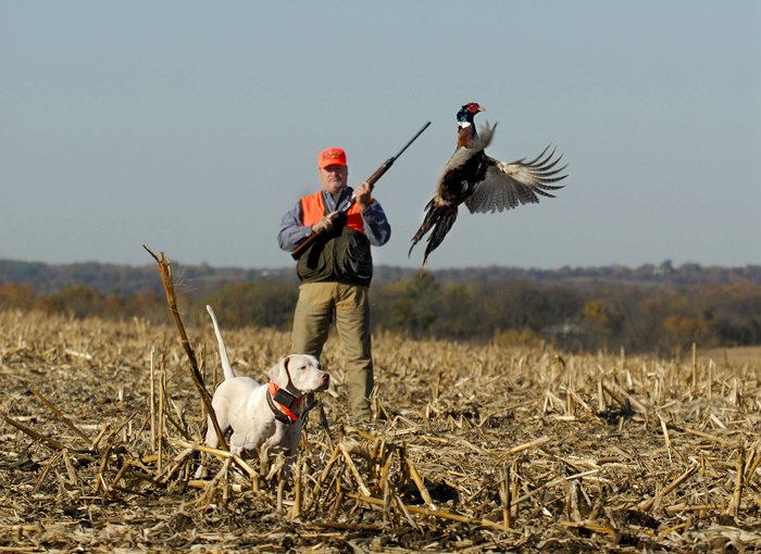 Kansas hunting lodge pheasant hunting upland bird hunts for Kansas fish and game