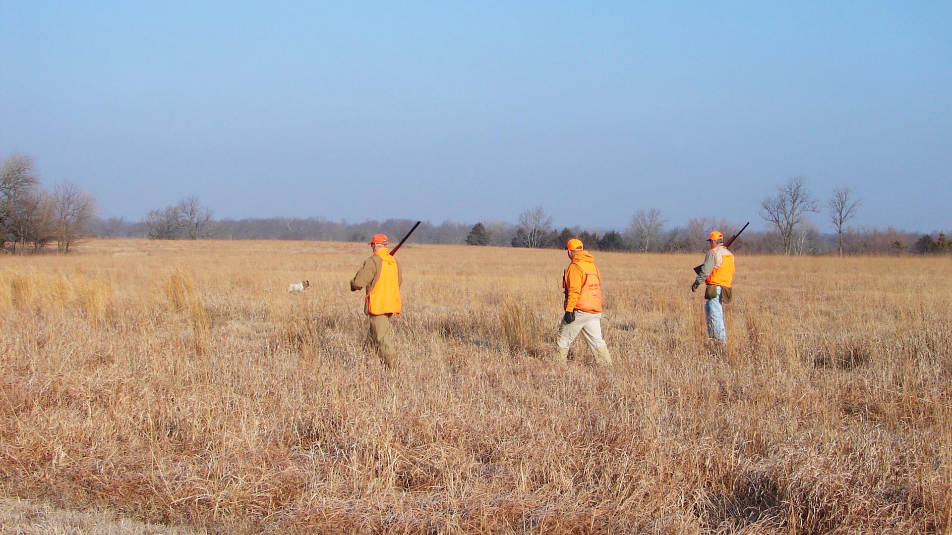 Kansas Pheasant Hunting